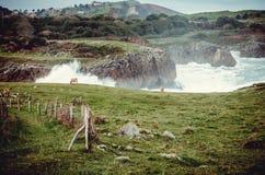 Еда коровы над withbackground стоковое изображение