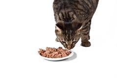 еда кота милая стоковая фотография rf
