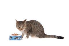 еда кота Стоковые Изображения RF