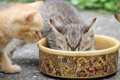Еда котят Стоковое Изображение RF