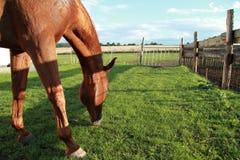 еда лошади Стоковая Фотография