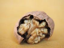 еда плодоовощ грецкого ореха Стоковое фото RF
