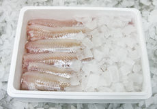еда рыб коробки стоковое изображение rf