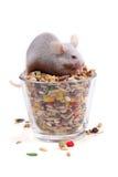 еда семян мыши стоковые изображения