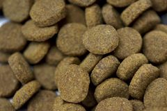 еда собаки сухая Стоковая Фотография