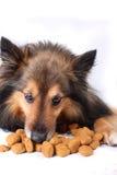 еда собаки стоковое изображение rf
