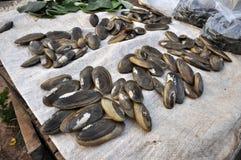 Еда Таиланд рынка раковины свежая Стоковые Фото