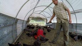Еда фермера подавая к курице 4k акции видеоматериалы