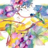 Еда ягоды виноградины здоровая r r : иллюстрация вектора