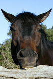 еда railing лошади Стоковое Изображение