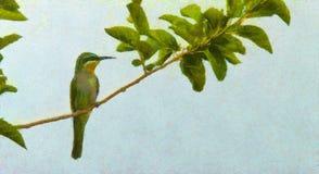 Едок пчелы, едок пчелы на предыдущий весенний день, птица весны Стиль картины маслом, иллюстрация птицы на холсте с зеленым цвето иллюстрация вектора