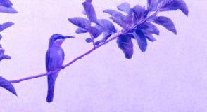 Едок пчелы, едок пчелы на предыдущий весенний день, птица весны Стиль картины маслом, иллюстрация птицы на холсте с розовым цвето бесплатная иллюстрация