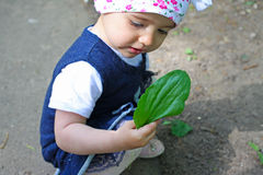 ее lyra листьев с показывать Стоковое фото RF