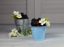 Ежевика в малых ведрах с цветками Стоковое Изображение
