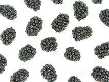 ежевики Стоковая Фотография RF