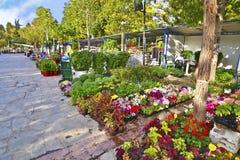 Ежегодная выставка цветка на горе Aigaleo Греции Стоковые Изображения