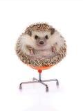 Еж сидя на стуле Стоковые Фото
