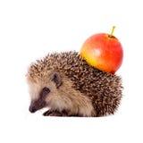 Еж с яблоком на ей назад изолировал Стоковое Изображение