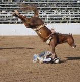 езда грубая Стоковая Фотография RF
