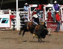 езда ковбоя быка к пробовать одичалый Стоковая Фотография