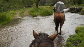 Езда на лошади через поток стоковые изображения