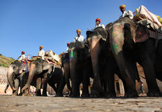 езда слона Стоковое фото RF