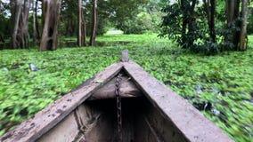 Езда шлюпки через Амазонку, проходящ зеленые листья на поверхность и деревья видеоматериал