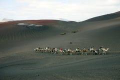 езда lanzarote верблюда Стоковая Фотография RF