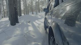 Езды автомобиля на дороге леса зимы Автомобиль в покрытой снег дороге среди деревьев Стоковое Фото