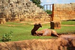 Езда верблюда в парке Стоковое фото RF