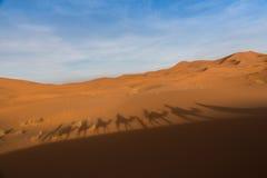Езда верблюда в Сахаре Стоковые Фотографии RF