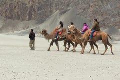 Езда верблюда в Nubra Стоковые Фото
