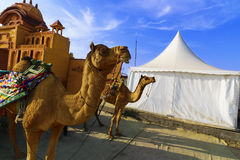 Езда верблюда на большом Rann Kutch Rann Utsav, Гуджарата Стоковая Фотография