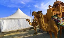 Езда верблюда на большом Rann Kutch Rann Utsav, Гуджарата Стоковые Фото