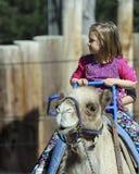 Езда верблюда на зоопарке парка Reid Стоковое Изображение
