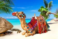 Езда верблюда на пляже Стоковое Изображение RF