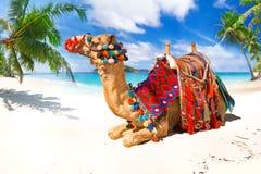 Езда верблюда на пляже Стоковые Фотографии RF