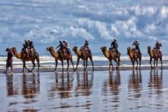 Езда верблюда Стоковое Фото