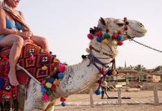 Езда верблюда Стоковое фото RF