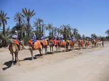 Езда верблюда Стоковое Изображение RF