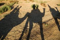 Езда верблюда Стоковые Изображения RF