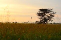Езда воздушного шара восхода солнца над Serengeti Стоковое фото RF