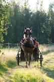 Езда воскресенья Стоковая Фотография