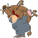 езда коровы Стоковая Фотография