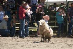 Езда овец Стоковое Изображение