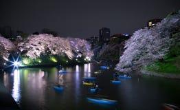 Езда речного судна под вишневыми цветами Стоковые Изображения RF