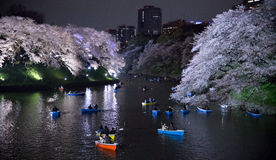 Езда речного судна под вишневыми цветами Стоковая Фотография RF