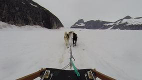 Езда скелетона собаки на toboggan на леднике Аляски