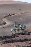 Езда туристов на верблюдах быть Стоковое Изображение RF
