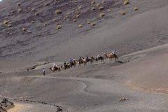 Езда туристов на верблюдах быть Стоковые Фотографии RF